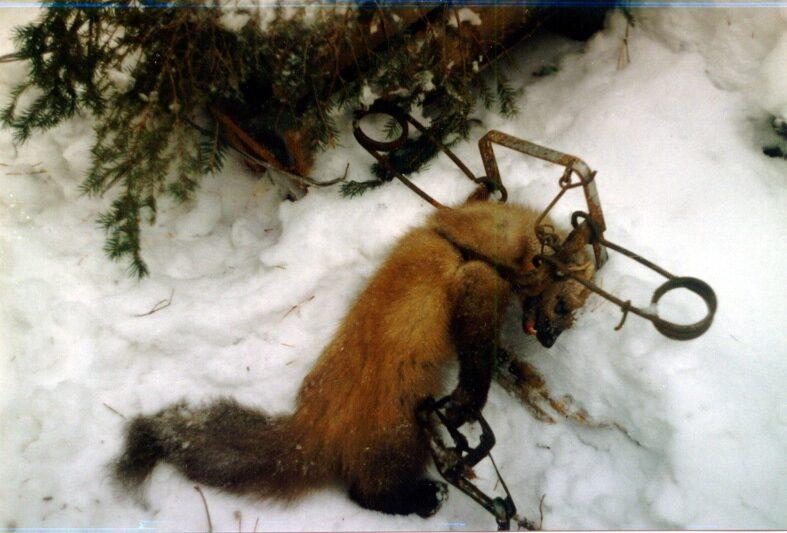 фото охотники